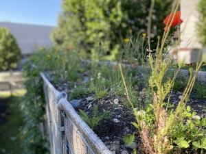 Lärmschutzwand Blumenkrone